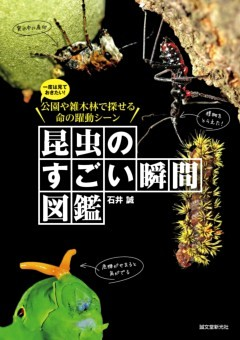 昆虫のすごい瞬間図鑑一度は見ておきたい!公園や雑木林で探せる命の躍動シーン